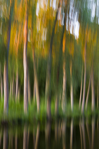 trees motion blur reflection water forest panning canoneos7d