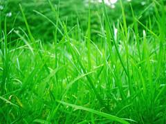 grass_macro