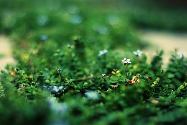 Tiny Flowers 32/365