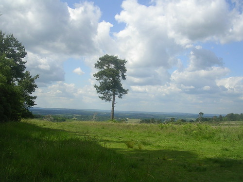 Ashdown Forest view
