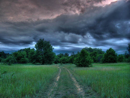blue trees sky green grass clouds grey evening ground pinetrees hdr highdynamicrange twotrack