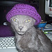 Cat wearing the preemie hat