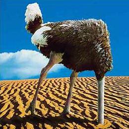 ostrich by zolierdos