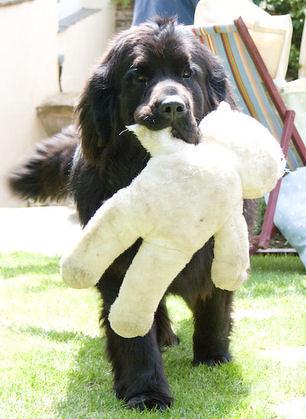 Ben and his Teddy Bear