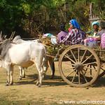 People on Oxen Cart - Mandalay, Burma