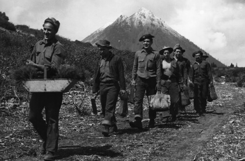 CCC enrollees carrying transplants to the fields, Shasta National Forest