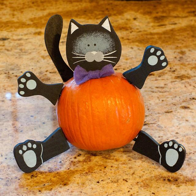 Pumpkin kitty flickr photo sharing for Pumpkin kitty designs