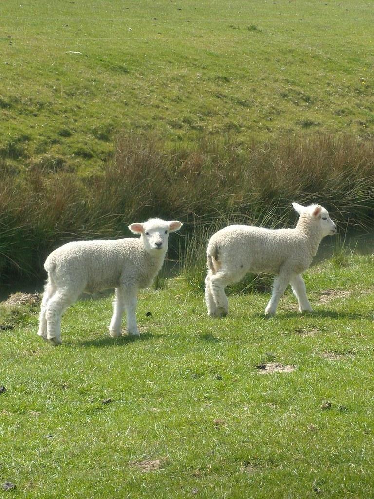 Lambs Rye to Hastings