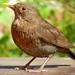 Incredible birds pics (12)