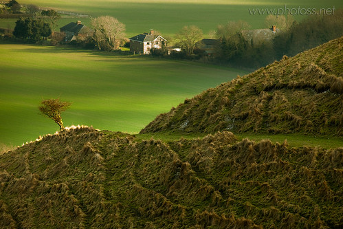 uk trees winter england tree green texture grass rural landscape sussex countryside nationalpark britain country hills kingston telephoto lone solitary midday rolling southdowns lewes hawthorn bucolic compressed ruffled longlens naturalengland kingstonridge takeaview touraroundtheworld tawclub5starsgold
