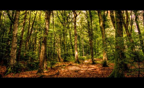 forest canon landscape sam luxembourg landschaft wald beaufort hdr berdorf echternac
