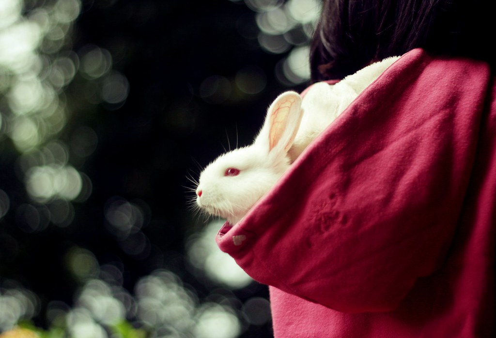 Bunny Bokeh