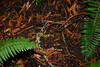 Banana slug in Muir Woods by Ivo Jansch