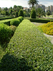 botanical garden, shrub, flower, garden, grass, tree, plant, hedge, lawn, groundcover,