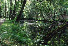 Río Sarria en las Aceñas