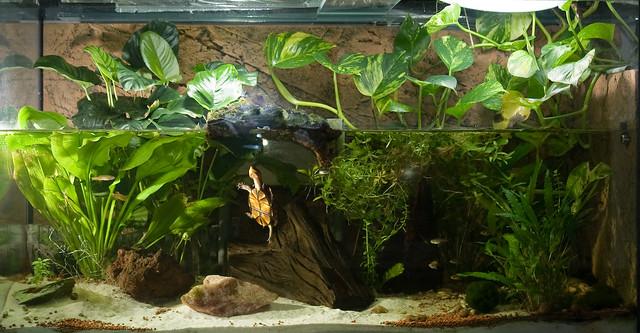 On Black: Schilkrötenaquarium / Turtle Tank by designladen ...