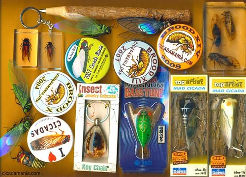 Cicada Stuff
