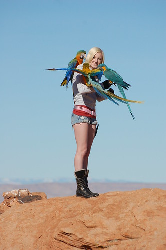 parrot training, training macaws, macaws, stop macaw screaming