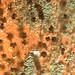 Aspergillus spp. on terra cotta