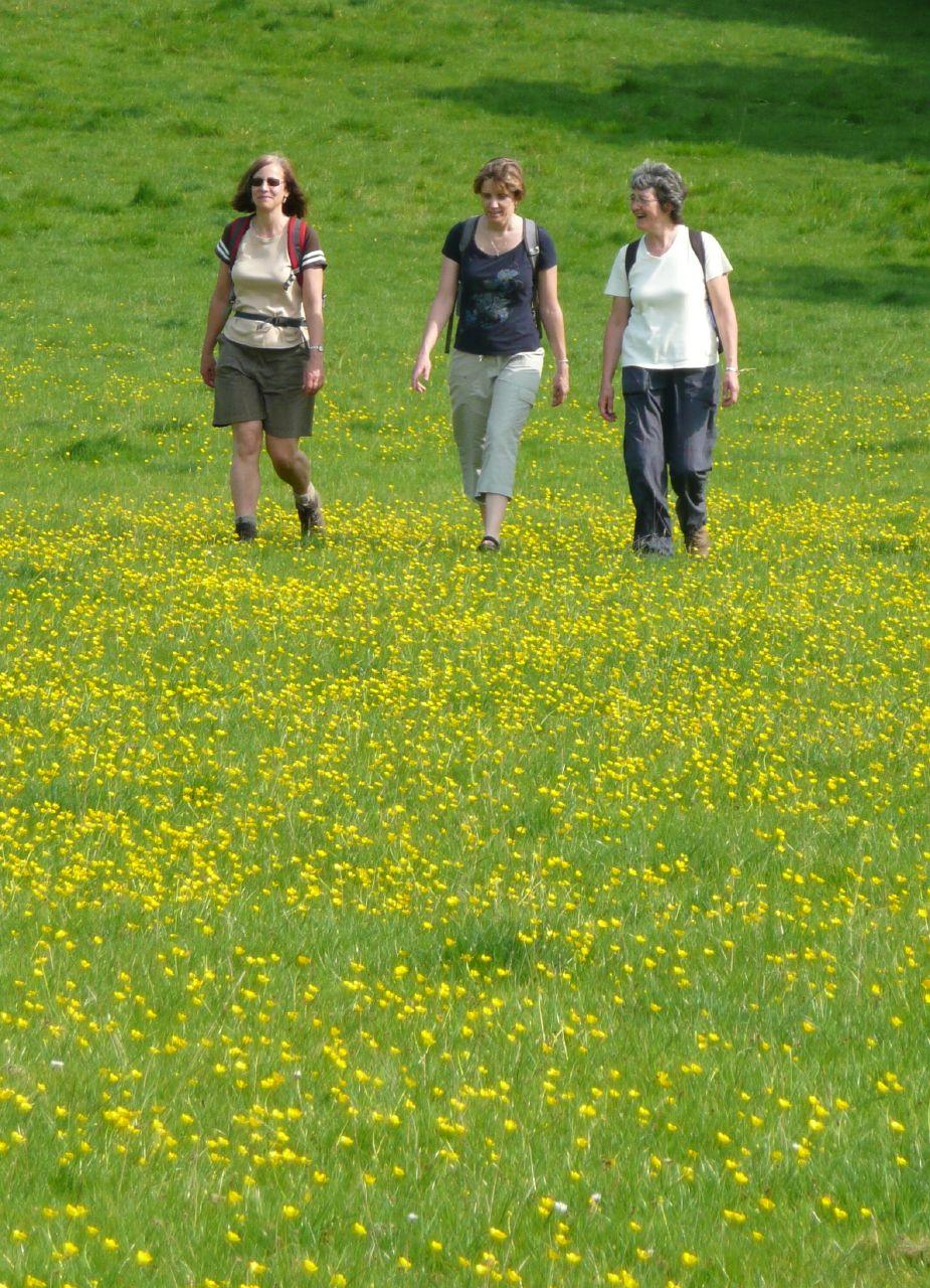 Book 1, Walk 53, Wye Circular Buttercups, 10 May '08.