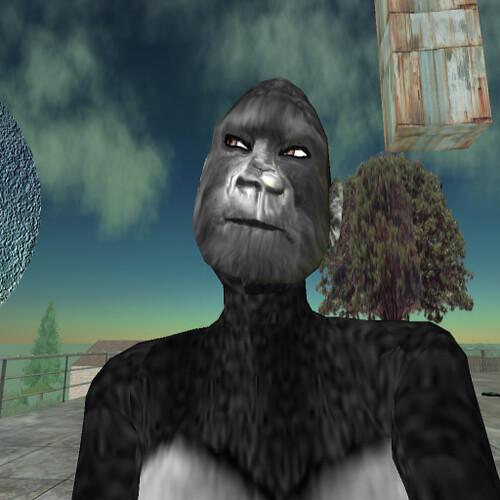 Gorilla Sex Story