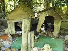hut, wood,