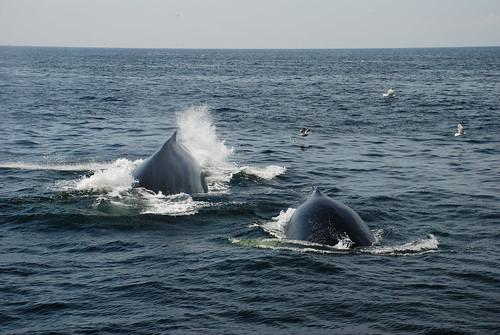 Mauritius Whale watching