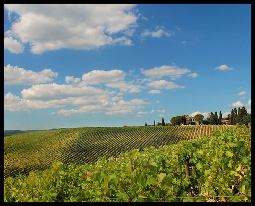 Vineyards of Chianti