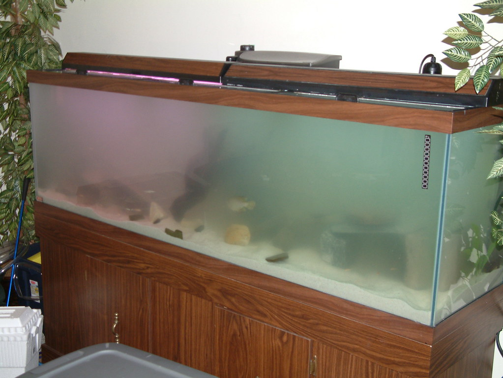 Tanks for the memories 135 gallon fresh water preditor for Sand for fish tank