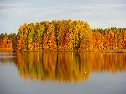 autumn trees lake reflection fall nature water yellow forest suomi finland scenery view september oulu maisema vesi metsä syksy luonto heijastus naturesfinest puut ruska syyskuu keltainen kuivasjärvi supershot impressedbeauty goldstaraward worldwidelandscapes natureselegantshots