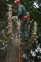 outdoor structure(0.0), abseiling(0.0), adventure(1.0), tree(1.0), arborist(1.0),