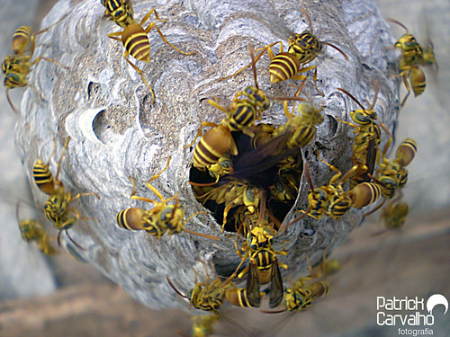 Bzzzzzzzzz, casinha de vespas