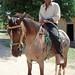 Hombre en caballo - Man on horse; Yorito, Yoro, Honduras