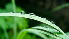 25 of 52 - Apres cela, le deluge