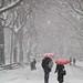A Stroll in the snow #1 by CVerwaal