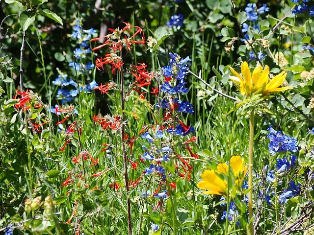 Utah Wildflowers - an album on Flickr