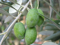 flower(0.0), plant(0.0), olive(0.0), produce(0.0), food(0.0), fruit(1.0), feijoa(1.0),