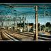 Trains Colour by mark.alexander5