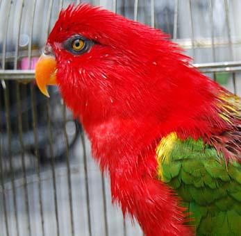 Burung Nuri | Flickr - Photo Sharing!