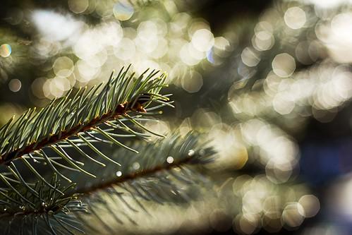 sunlight december bokeh canonef50mmf14usm kvdl