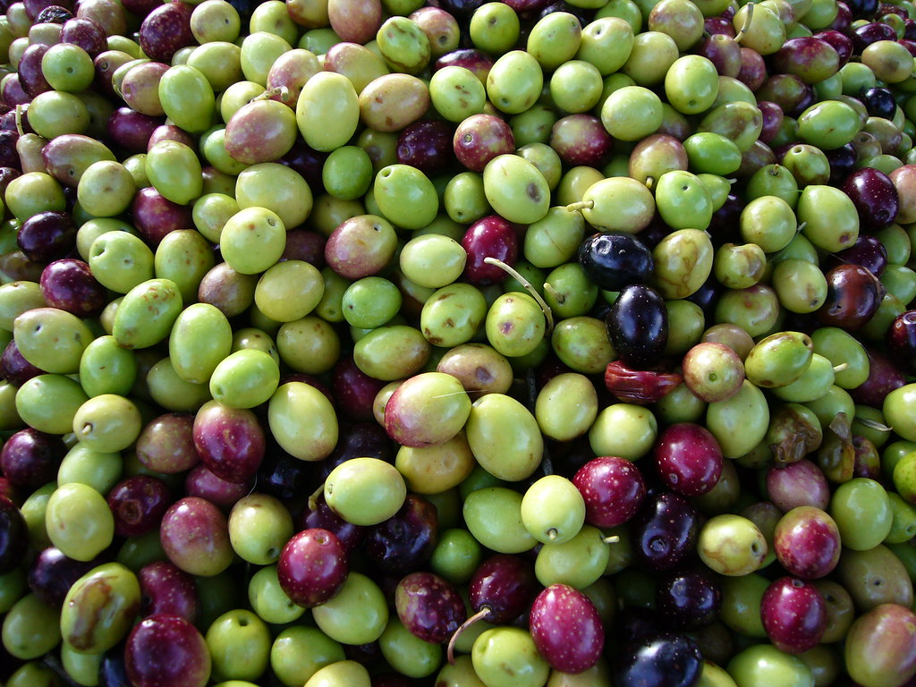 Olive!!!