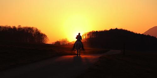 sunset shadow horse sun nature animal landscape evening mood ride d70s diamondclassphotographer flickrdiamond flickdiamond eveningride