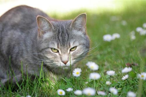 Cute Cat In Daises