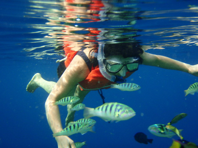 2314685968_5b77166ccb_z - Ever gone scuba diving? - Anonymous Diary Blog