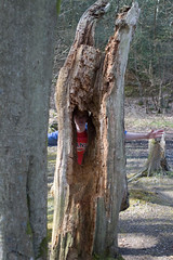 tree stump, wood, tree, plant, trunk, wildlife,