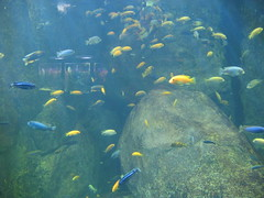 fish, coral reef fish, marine biology, underwater, reef, aquarium,