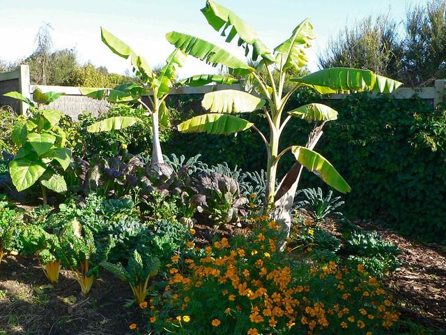 Auckland Botanical Gardens Manukau Auckland New Zealand