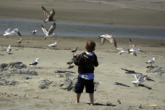 Feeding seagulls by theforster4