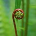 Spiral fern by terrabellastudios