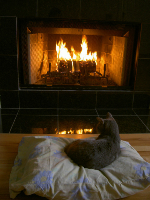 Image result for images of black cat sitting by the fire